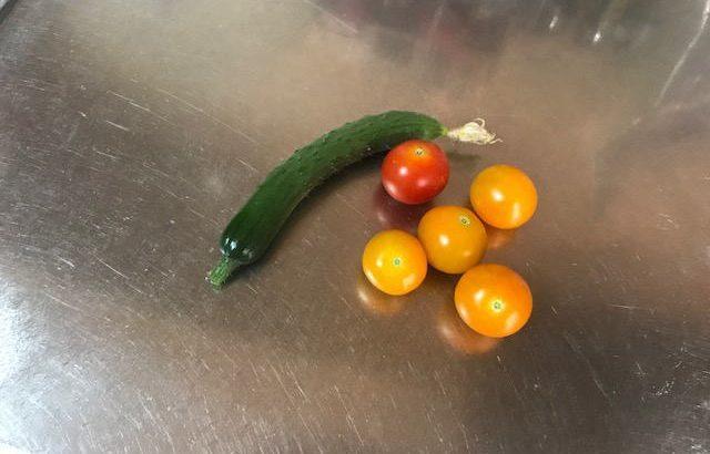 家庭菜園 きゅうり やっとできてきた!