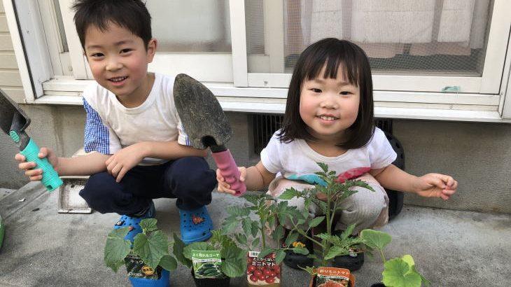 家庭菜園 2019スタートです